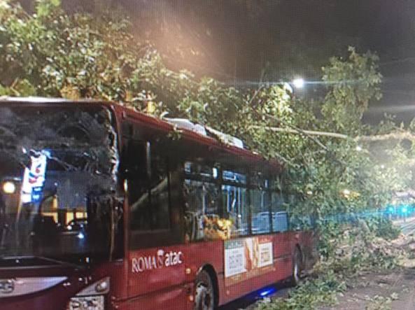 Roma, albero cade su un autobus Atac: ferito il conducente