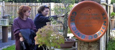 Bonsai nel giardino d'Oriente dei Vivai Le Mura