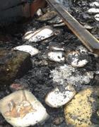 Libri e manifesti: il fuoco ha distrutto tutto (foto Lipu)