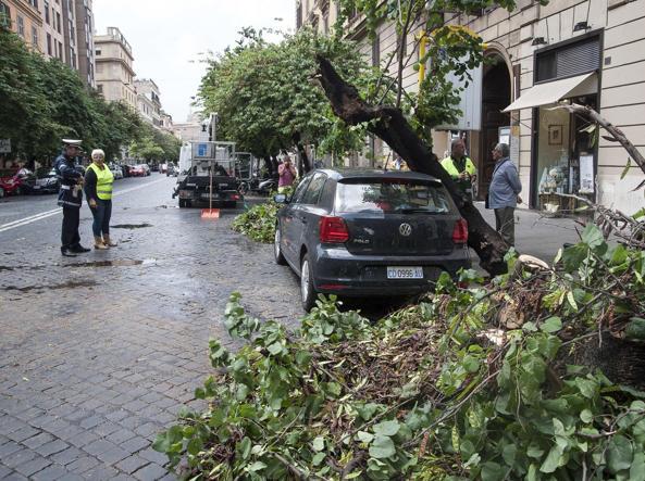 Ufficio Verde Pubblico Comune Di Bologna : Servizio giardini 30 nuovi operatori: coprono solo il 7% dei posti
