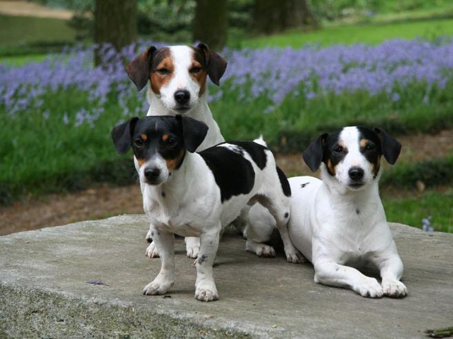 Getta il cane del figlio della compagna  dal settimo piano E rischia il linciaggio