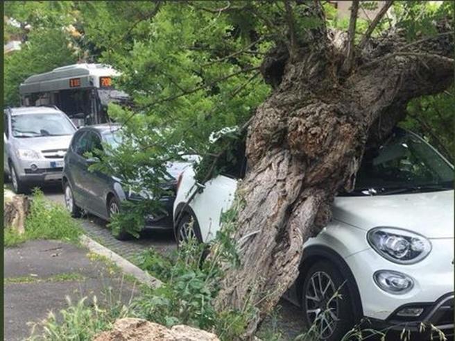 Roma, albero si schianta su autoè il terzo crollo   in 3 giorni |Foto