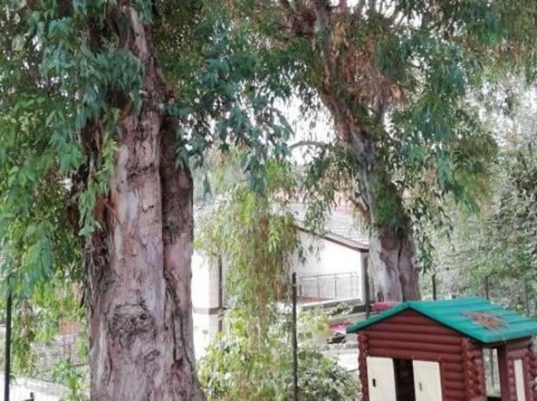 Roma alberi pericolanti il giardino del nido trilly - Grandi alberi da giardino ...