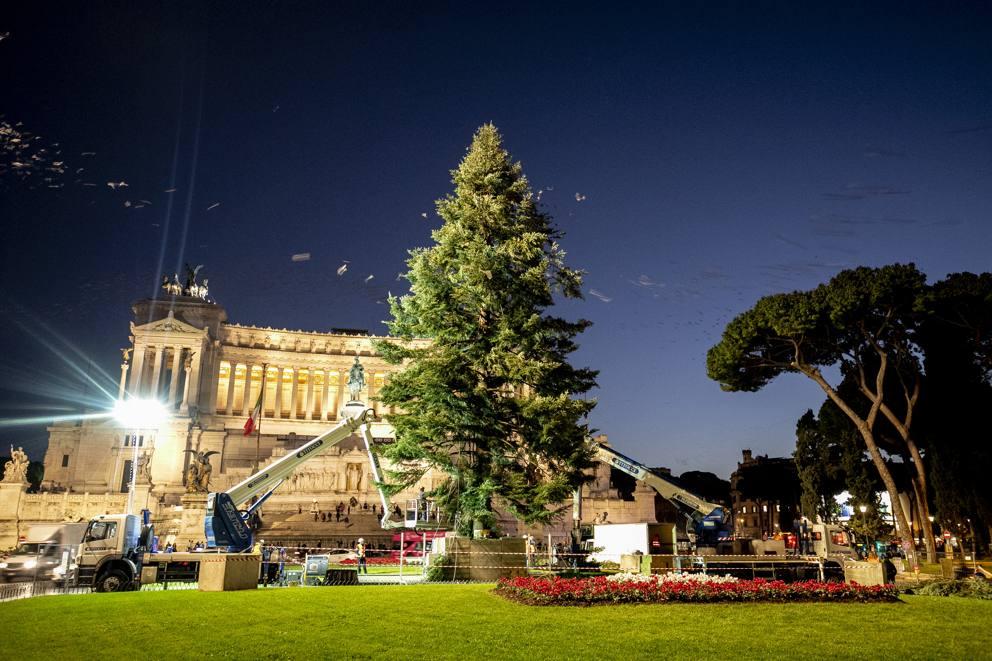 Albero Di Natale Roma.Roma Spelacchio 2 0 Ecco L Albero Di Natale Arrivato In