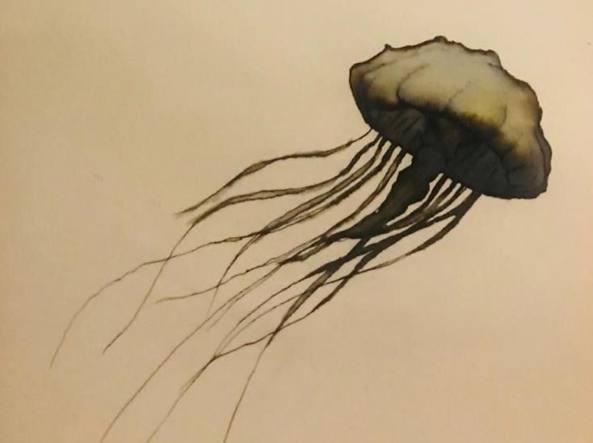 Una delle immagini di medusa stampate sulla capsule collection «Eco marine» di 77 denari