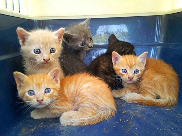 Roma i suoi gatti affidati al canile padrona denuncia gli for Cercasi ufficio roma