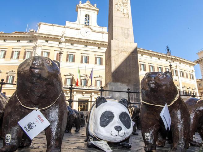 Roma, 50 orsi marsicani di cartapesta davanti Montecitorio