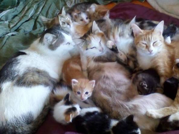 Roma, la donna che vive con 47 gatti in una casa di 50 metri quadrati. Appello agli animalisti: «Va aiutata»- Corriere.it
