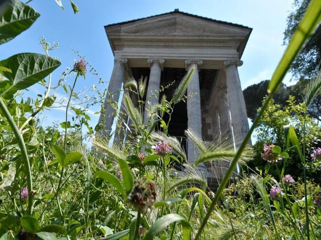 I monumenti di Roma coperti da erba alta e rovi  Video | Foto