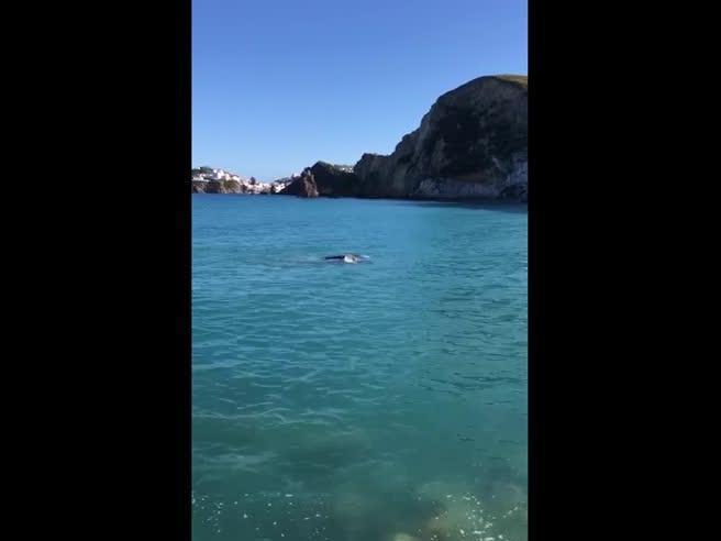 La balena avvistata a Ponza, lo «sbuffo» filmato da un marinaio