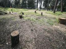Roma, a Villa Glori alberi tagliati e potature. Italia Nostra: «Si rispetti il fermo»