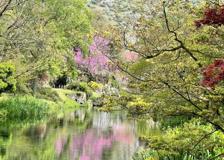 Su Fuji Tv l'incanto dei giardini di Ninfa: l'Italia che piace al Giappone