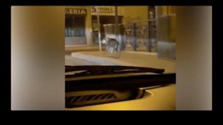 «Attenti al lupo». Paura nel centro di Formello, alle porte di Roma