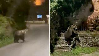 Ciociaria, un orso va spasso di notte per le strade ed entra in un giardino