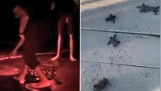A Ostia lo spettacolo della nascita di una nidiata di tartarughine