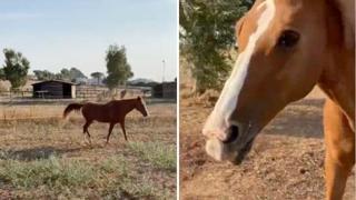 Primo Sole, il cavallo rubato: ecco le immagini prima della scomparsa